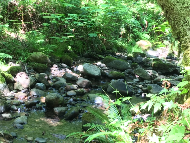 ../images/trails/primrose_loop//02 Creek in summer.jpg