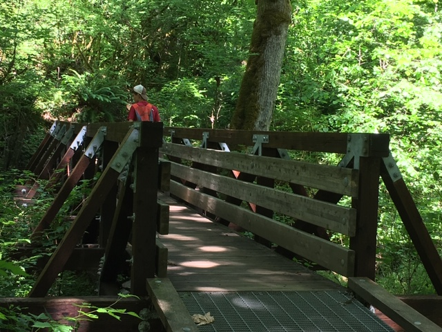 ../images/trails/primrose_loop//03 First footbridge.jpg