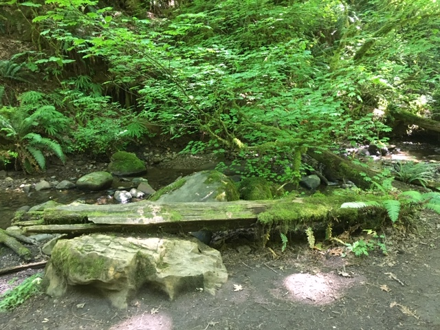 ../images/trails/primrose_loop//04 Glade by creek with mossy log.jpg